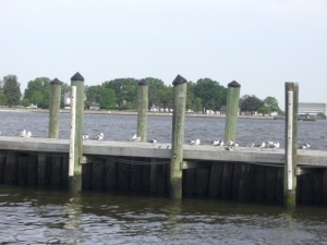 gulls on dock