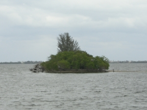 Island in Indian river Nov 2010