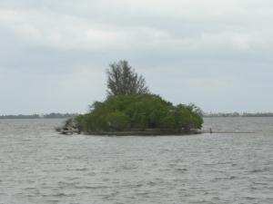 Island in Indian river Nov 2010