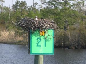 Osprey nest on Marker
