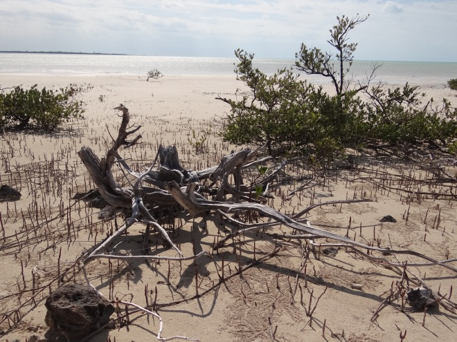 Driftwood beach art at nearby mangrove flats