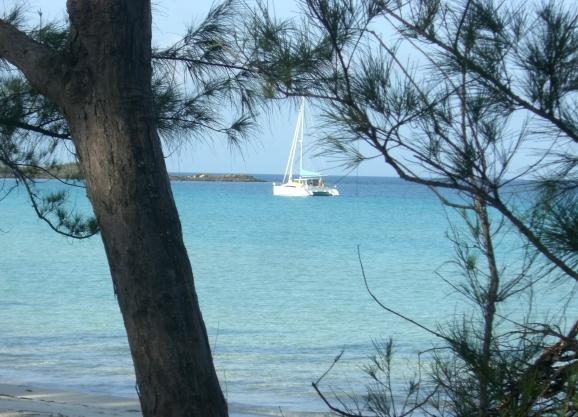 Ortolan resting happily in Alabaster Bay