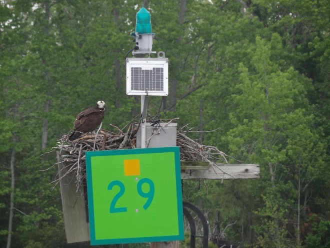 Robust nest with pizazz. Perfect for the environmentally conscious osprey who likes a bit of flash
