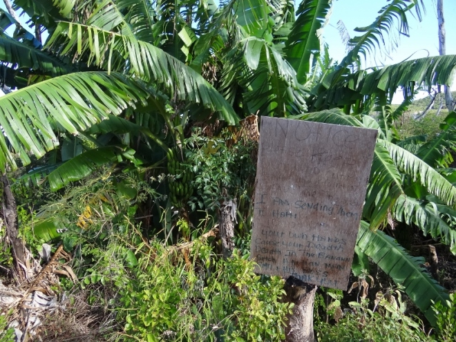 Someone planted banana trees to send bananas to Haiti. The sign admonished those who'd done damage