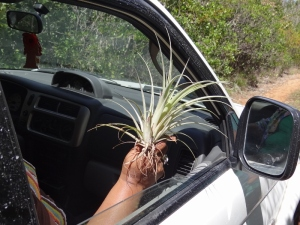 A few of the women were bromeliad crazy and found a spot where they snagged quite a few