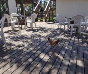 Chicken for lunch? Dining on the deck at the Buccaneer Club