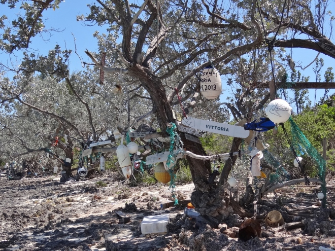 Signing trees at Allan's Cay