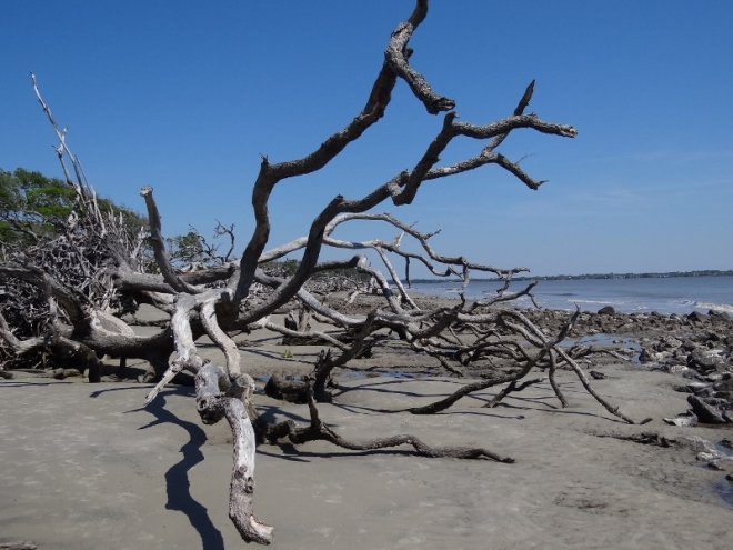 Driftwood Beach- an extreme and haunting example of serious land erosion