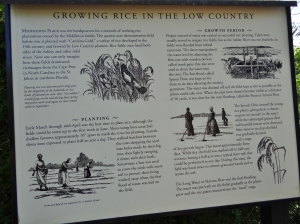 This sign provided a good basic intro to growing rice