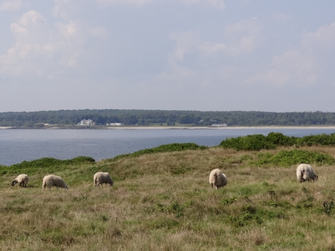The mainland is in the background. We had to walk very carefully once we got to the sheep area