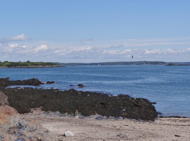 Looking north toward Dolphin Marina