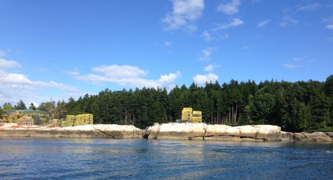 Lobster traps can be found everywhere- on shore, on rafts in the water and on the rocks
