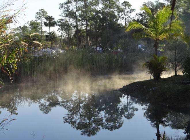 A chilly, misty pond morning