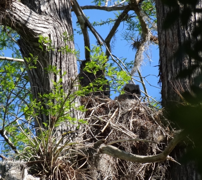 Another surprise. Great horned owls are rarely seen.