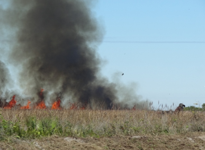 RX fire burns in a field