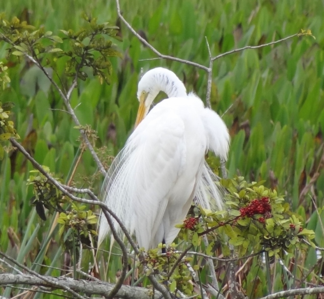 This great egret was a delight to watch