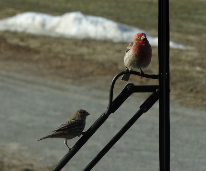 Mr & Mrs House Finch check out the new windshield and us!