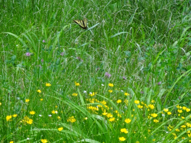 Pretty field flowers and butterfly next to our site.