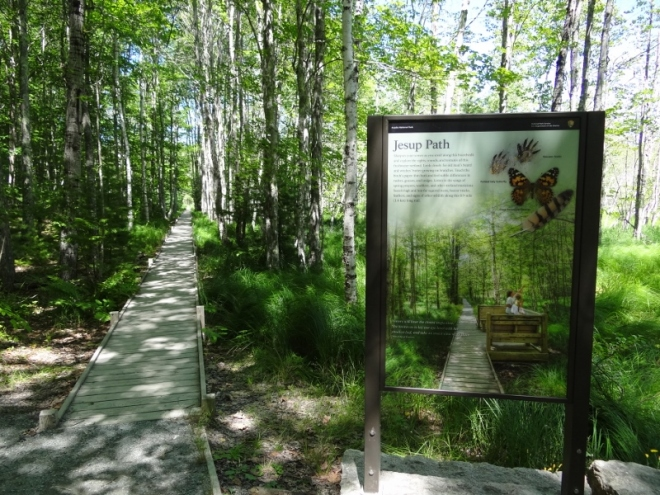 Easy walk along boardwalk- Jesup Path