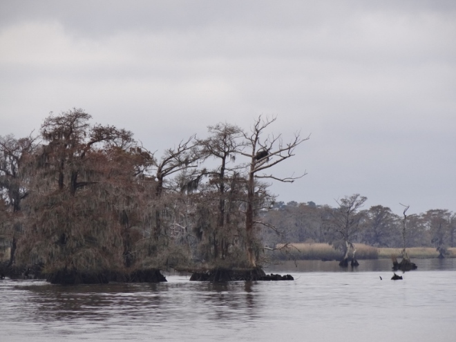 The always scenic Waccamaw River