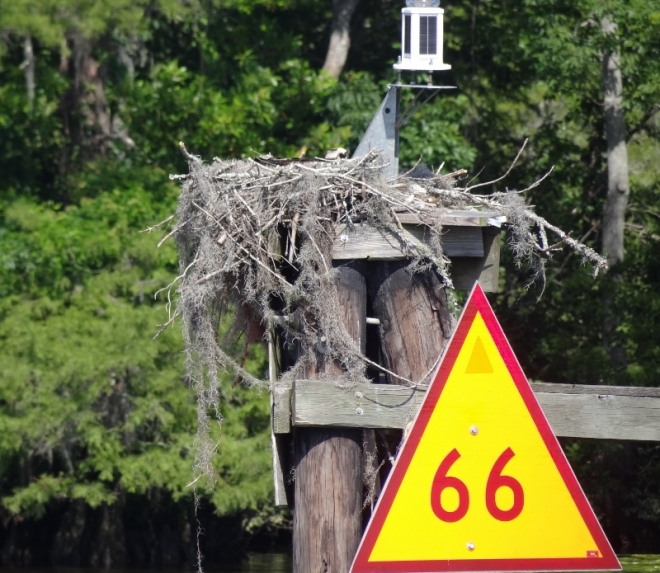 Osprey address: #66 Waccamaw River