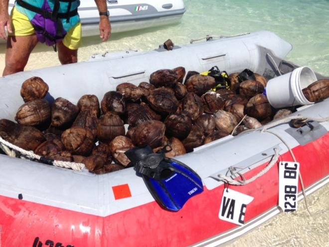 Alotta coconuts