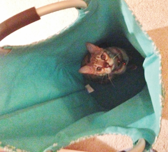 My best new laundry helper