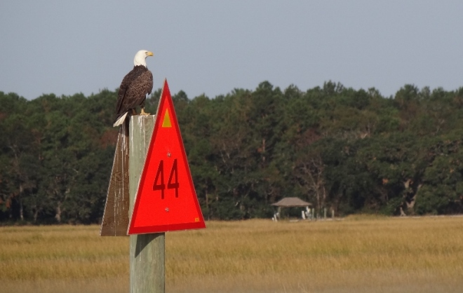 Bald eagle points the way