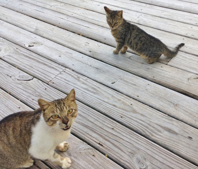 Feral cats- dontyou hiss at me